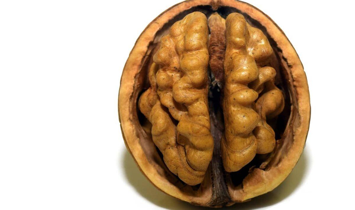 Glukoza - paliwo do mózgu